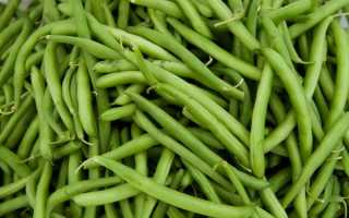 Стручковая зеленая фасоль полезные свойства