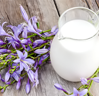 Что полезного в молоке