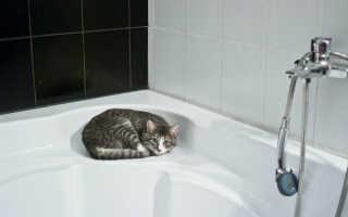 Полезно ли принимать ванну