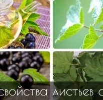 Листья смородины польза