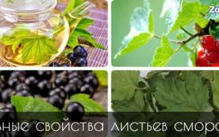 Листья черной смородины полезные свойства
