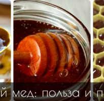 Каштановый мед полезные свойства для женщин