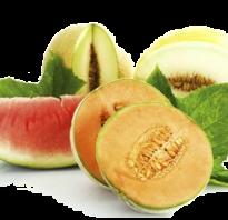Что полезнее дыня или арбуз